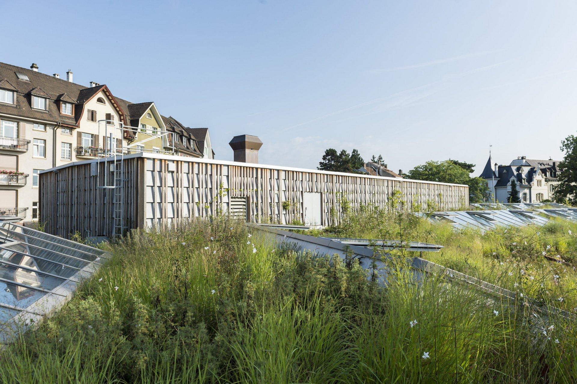 Elefantenhaus, Heulager, Holzkonstruktion, Material, Tierhäuser Stall, ZOO BASEL, Zoo Basel Gebäude