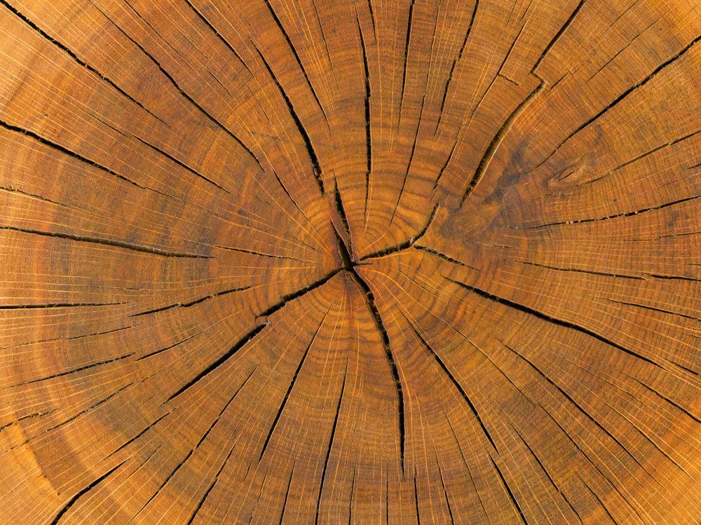 Vorteile des Baustoffs Holz